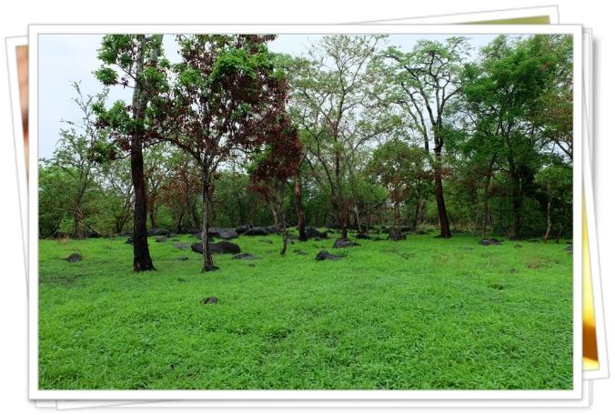 vegetasi hijau TN Baluran